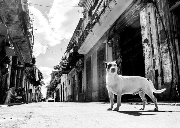 Gatehund, fotokunst veggbilde / plakat av Terje Kolaas