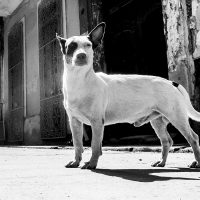 Gatehund av Terje Kolaas