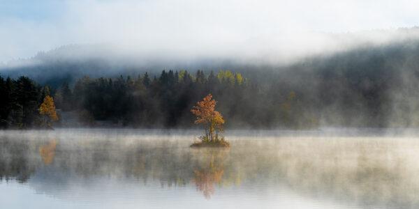 Høstfarget landskap i morgentåke, fotokunst veggbilde / plakat av Terje Kolaas