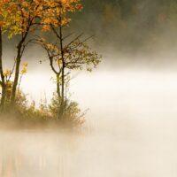Høstfarget tre i morgentåke III, fotokunst veggbilde / plakat av Terje Kolaas