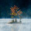 Høstfarget tre i morgentåke, fotokunst veggbilde / plakat av Terje Kolaas