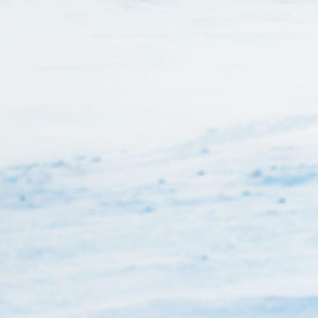Moskus på Dovre, fotokunst veggbilde / plakat av Terje Kolaas
