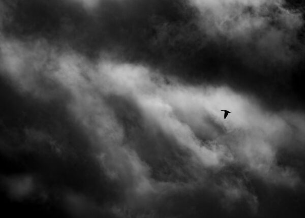 Liten fugl på urolig himmel, fotokunst veggbilde / plakat av Terje Kolaas