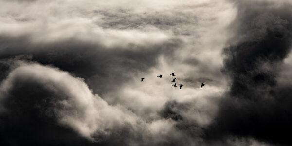 Fugleflokk på urolig himmel, fotokunst veggbilde / plakat av Terje Kolaas