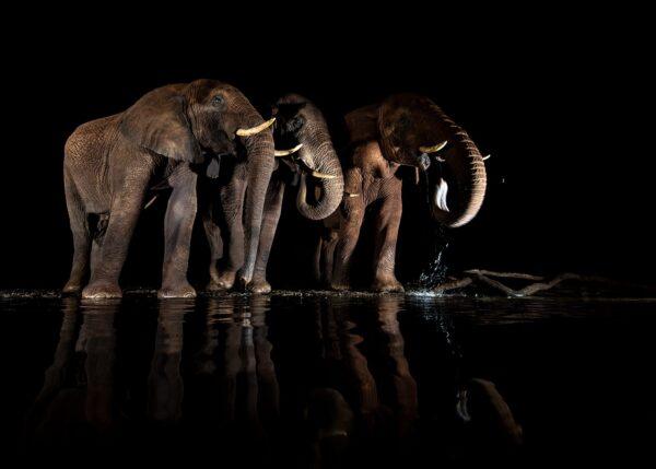 Elefanter ved vannhullet I, fotokunst veggbilde / plakat av Terje Kolaas