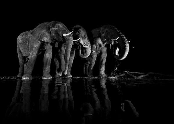 Elefanter ved vannhullet II, fotokunst veggbilde / plakat av Terje Kolaas