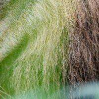 Portrett av løve, fotokunst veggbilde / plakat av Terje Kolaas