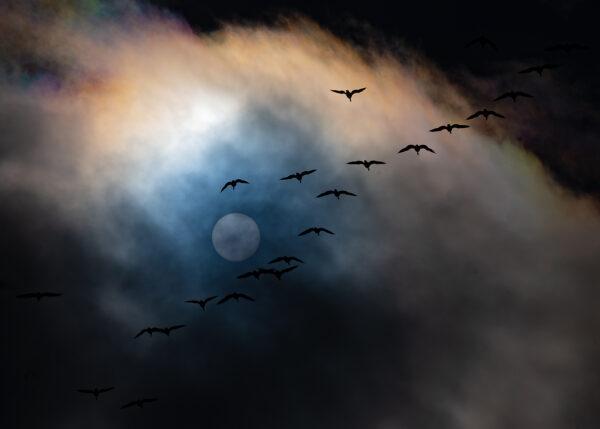Birds on passage, fotokunst veggbilde / plakat av Terje Kolaas