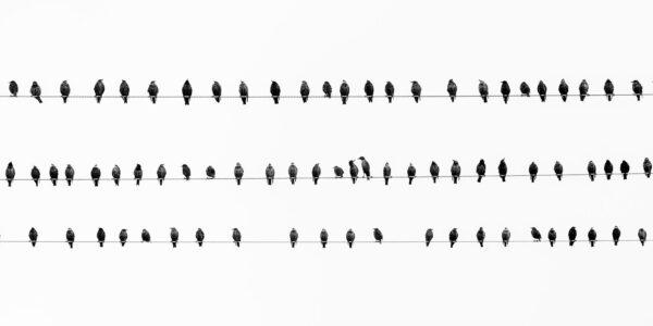 Stær på rekke og rad, fotokunst veggbilde / plakat av Terje Kolaas