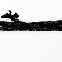 Skarver på svaberg, fotokunst veggbilde / plakat av Terje Kolaas
