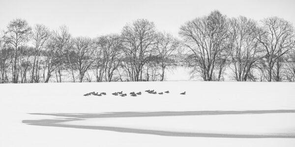 Fugler i vinterlandskap, fotokunst veggbilde / plakat av Terje Kolaas