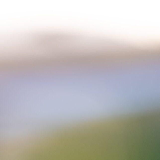 Portrett av lunde, fotokunst veggbilde / plakat av Terje Kolaas