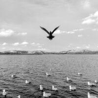 Tyvjo i kystlandskap, fotokunst veggbilde / plakat av Terje Kolaas