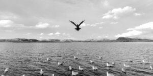 Tyvjo i flukt, fotokunst veggbilde / plakat av Terje Kolaas