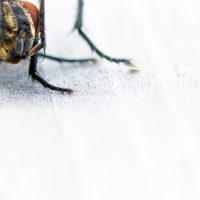 Kjærlighet mellom fluer, fotokunst veggbilde / plakat av Terje Kolaas
