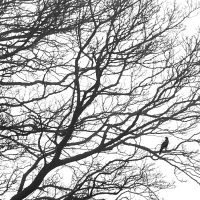 Morgenfugl, fotokunst veggbilde / plakat av Tom Erik Smedal