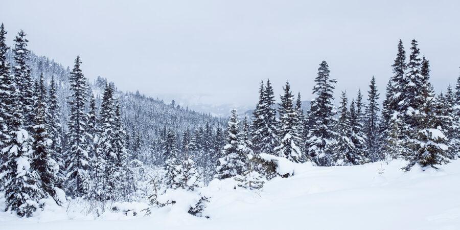 Vinterland av Thor Håkon Ulstad