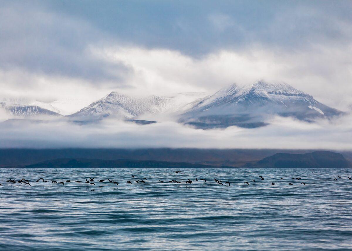 Fulger som flyr over vann i aktisk lanskap på Svalbard, fotokunst veggbilde / plakat av Thor Håkon Ulstad