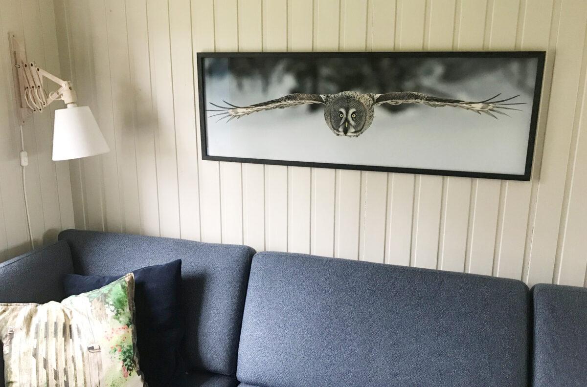 Lappugla er karakteristisk med sine store briller, fotokunst veggbilde / plakat av Kjell Erik Moseid