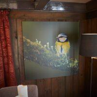 En blåmeis sitter på en grønn, mosegrodd kvist, fotokunst veggbilde / plakat av Terje Kolaas