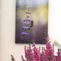 Bie på lavendel blomst nærbilde, fotokunst veggbilde / plakat av Peder Aaserud Eikeland