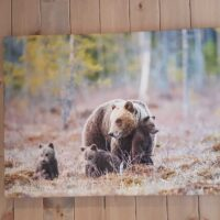 Bjørnebinna passer godt på de tre små ungene sine, fotokunst veggbilde / plakat av Kjell Erik Moseid