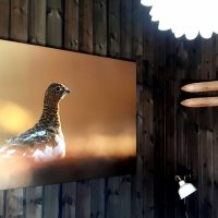 Ei vaktsom rypehøne en sen nattetime, fotokunst veggbilde / plakat av Kjell Erik Moseid
