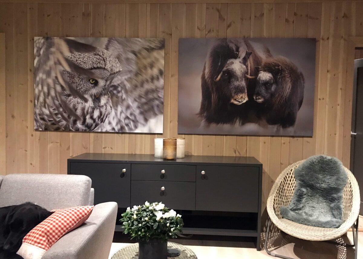 Ei lappugle flakser med vingene, fotokunst veggbilde / plakat av Terje Kolaas